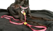 More than Style: Three Benefits of Personalizing Dog Collars