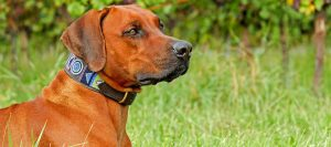 Featured Dog1 300x133 - Featured-Dog1