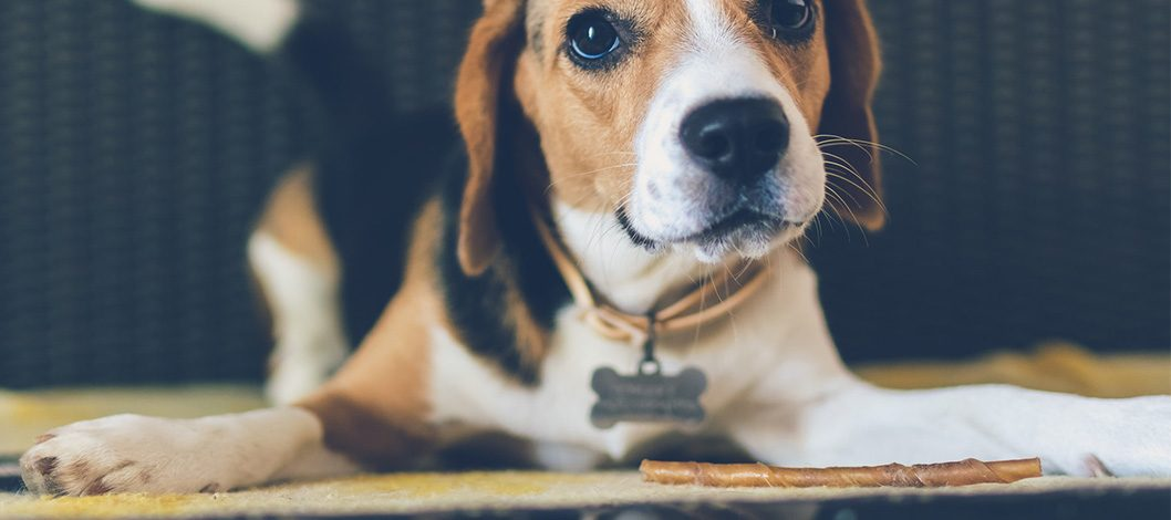 Being the Best Dog Parent: Why You Should Be Picky About Bully Sticks and Collars