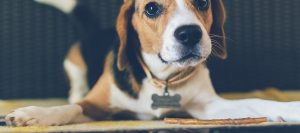 Featured Dog 4 300x133 - Featured-Dog-4