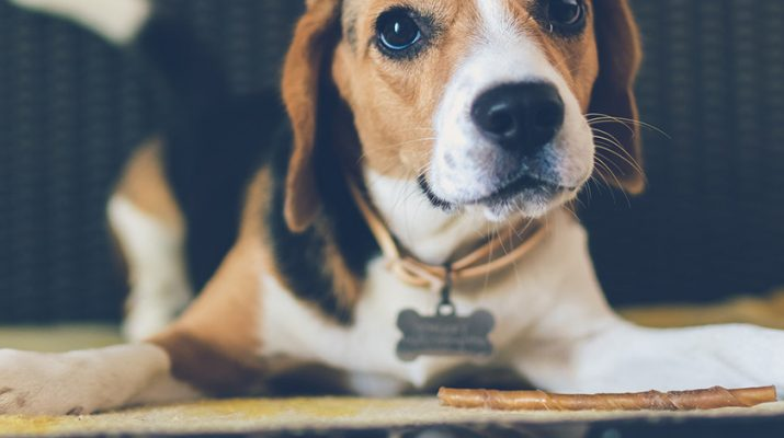 Featured Dog 4 715x400 - Being the Best Dog Parent: Why You Should Be Picky About Bully Sticks and Collars