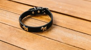 customdogcollar 300x166 - customdogcollar