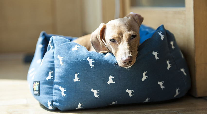 dogbed - Get Your Money's worth: Dog Accessories You're Better off Ignoring