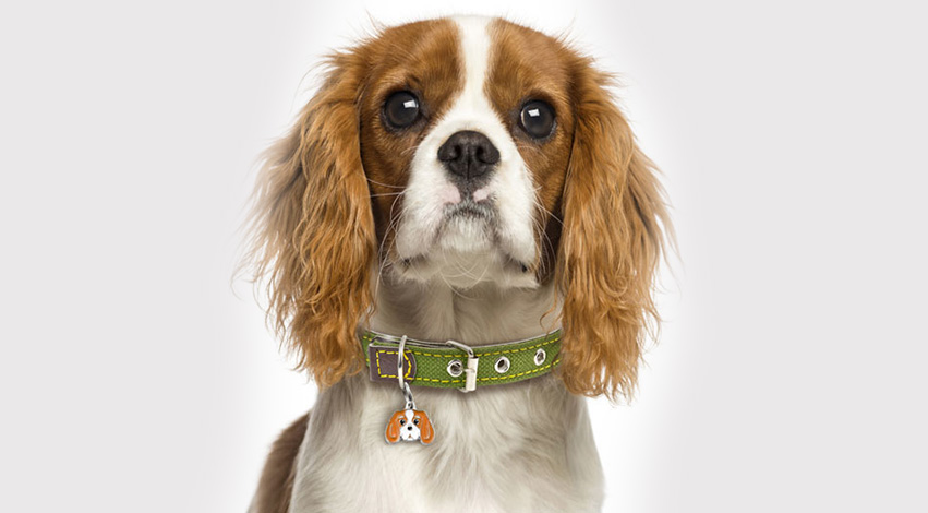 dogid - Not Just Collars: Three Important Dog Accessories You Should Have