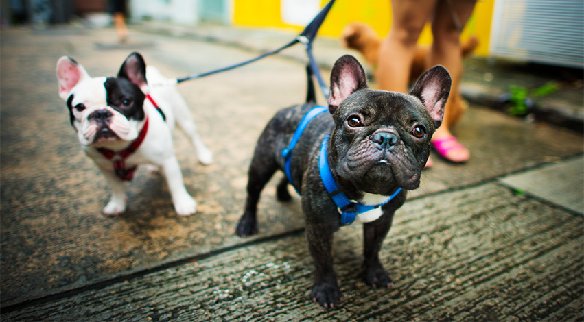 dogleash - Not Just Collars: Three Important Dog Accessories You Should Have