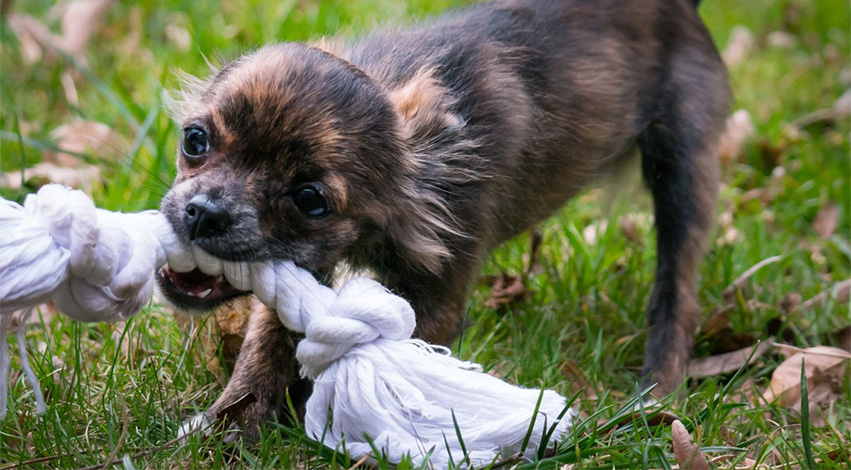 dogtoys - Get Your Money's worth: Dog Accessories You're Better off Ignoring